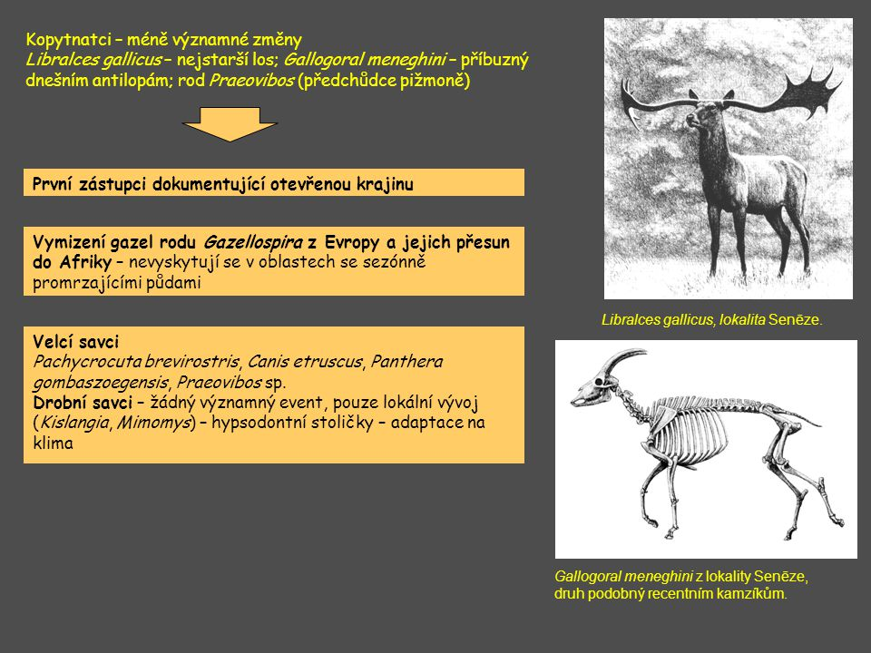 absence mediteránních taxonů; teplé spíše sušší prostředí lesostepního rázu, blízkost vodních toků klimatické optimum převaha prvků otevřené a stepní krajiny (Truncatinella claustralis, ), velmi teplo (Discus ruderatus).