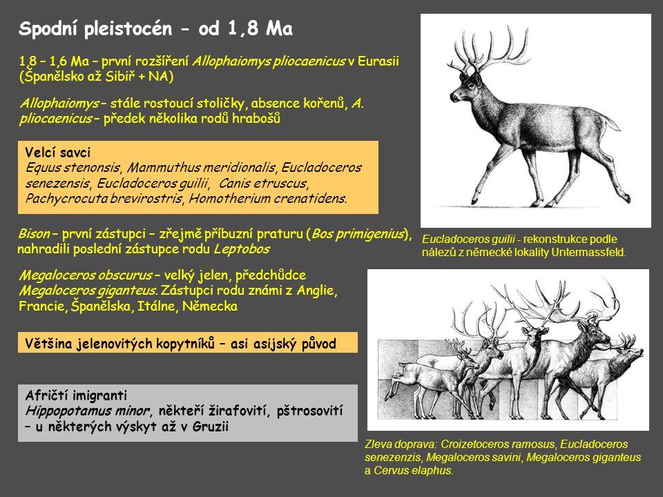 Hominidi – Homo ergaster (1,7 Ma, Gruzie), fauna typicky spodnopleistocenní, přítomni afričtí zástupci (i u savčí mikrofauny) Střední východ – glaciální fáze Eburonu se projevila pluviálním obdobím, ne suchou fází !!.