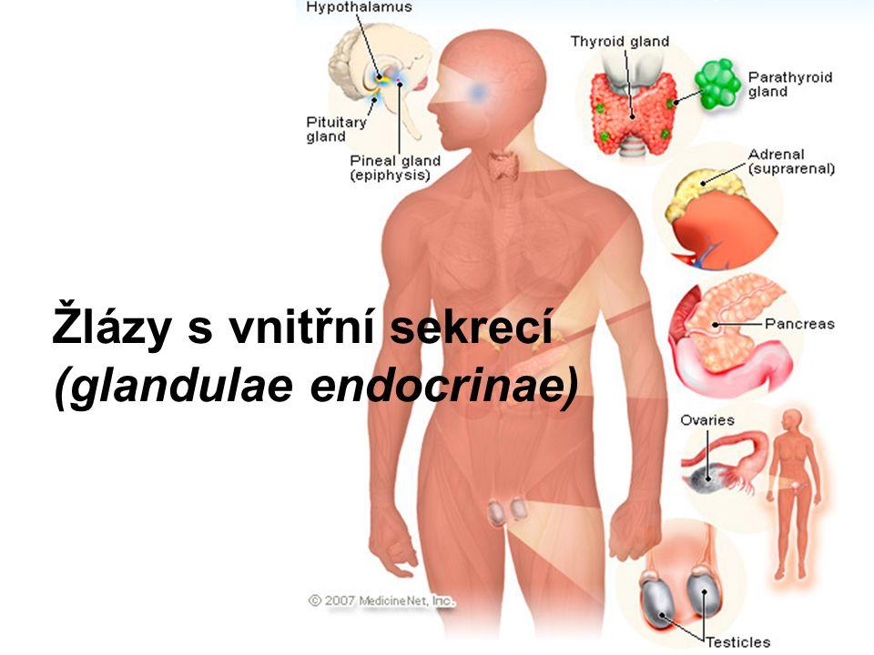 Žlázy s vnitřní sekrecí (glandulae endocrinae)