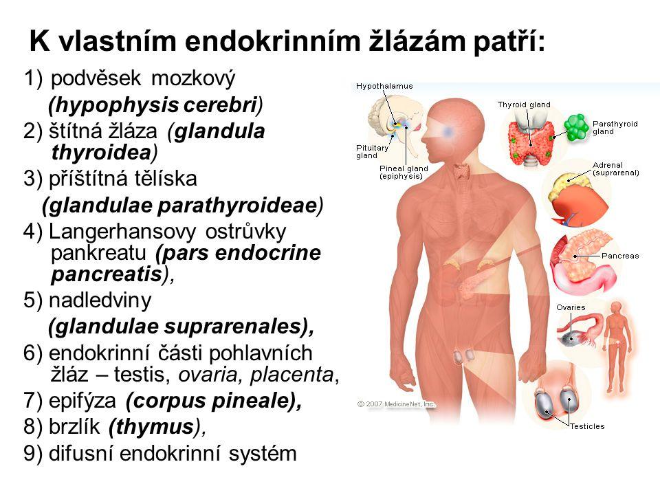 K vlastním endokrinním žlázám patří: 1)podvěsek mozkový (hypophysis cerebri) 2) štítná žláza (glandula thyroidea) 3) příštítná tělíska (glandulae para
