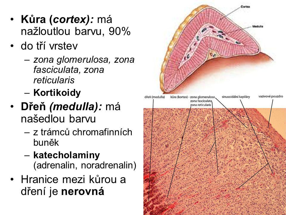 Kůra (cortex): má nažloutlou barvu, 90% do tří vrstev –zona glomerulosa, zona fasciculata, zona reticularis –Kortikoidy Dřeň (medulla): má našedlou barvu –z trámců chromafinních buněk –katecholaminy (adrenalin, noradrenalin) Hranice mezi kůrou a dření je nerovná