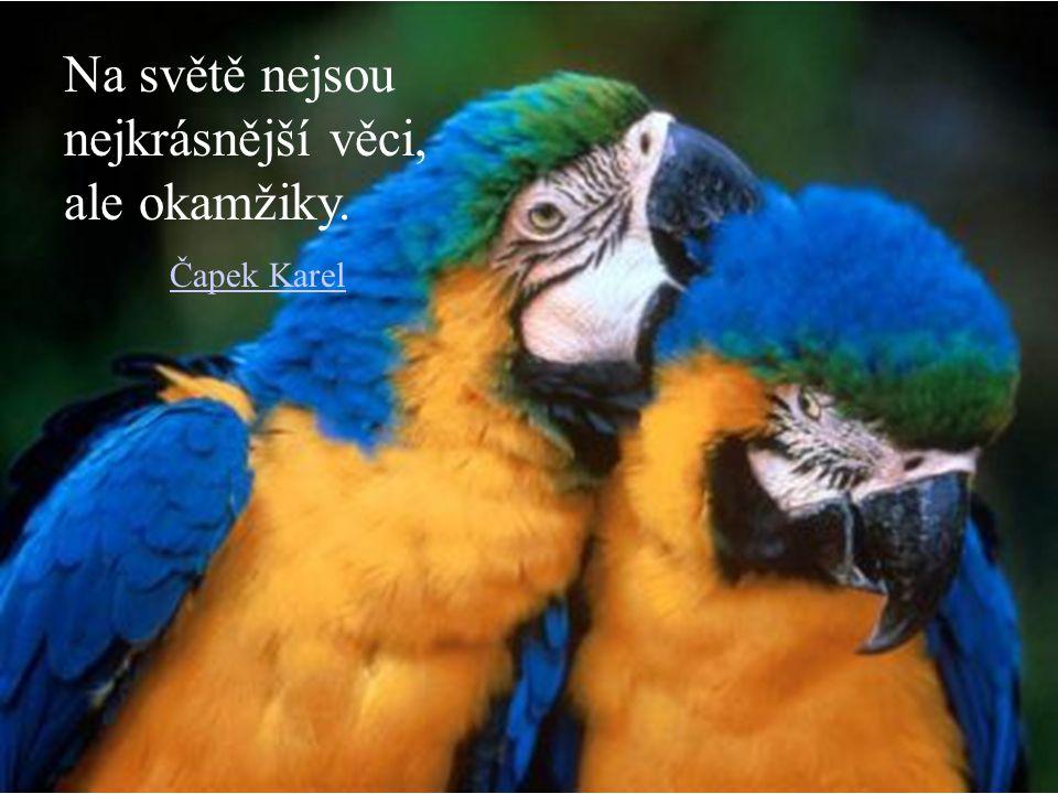 Milujem ty, kteří nás odmítají a odmítáme ty, kteří nás milují. Seneca Lucius Annaeus