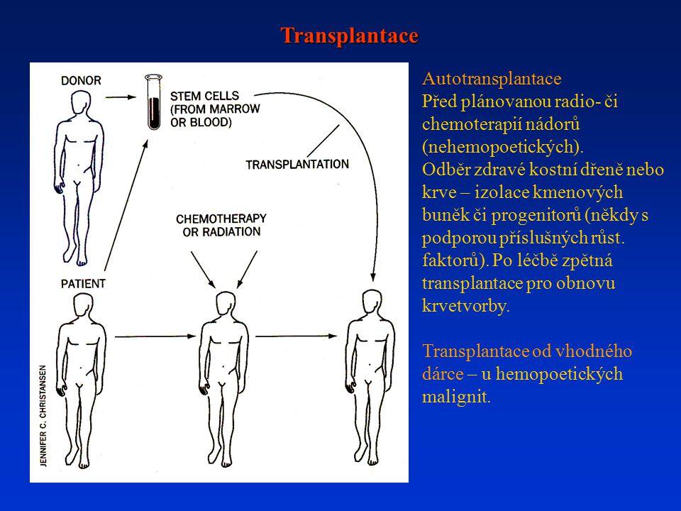 Transplantace Autotransplantace Před plánovanou radio- či chemoterapií nádorů (nehemopoetických). Odběr zdravé kostní dřeně nebo krve – izolace kmenov