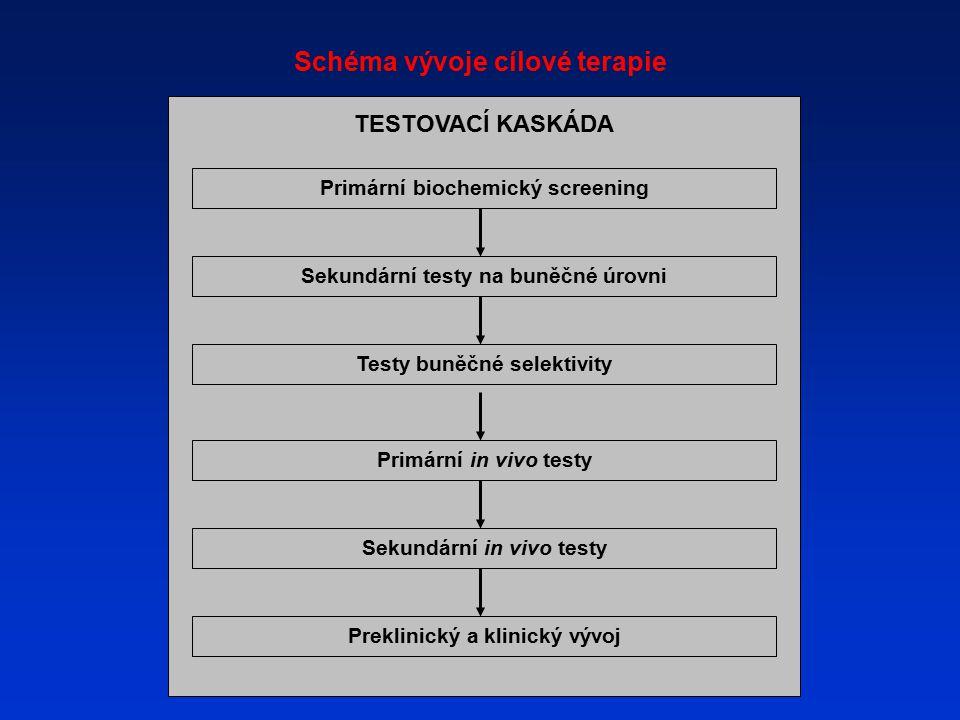 Schéma vývoje cílové terapie TESTOVACÍ KASKÁDA Primární biochemický screening Sekundární testy na buněčné úrovni Testy buněčné selektivity Primární in