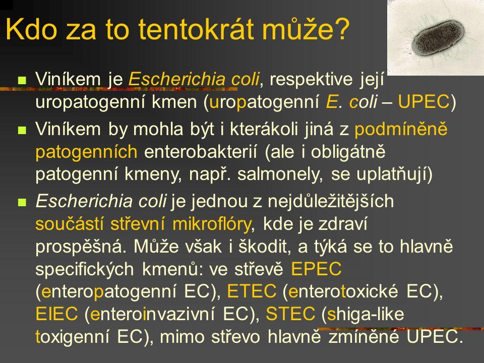Kdo za to tentokrát může? Viníkem je Escherichia coli, respektive její uropatogenní kmen (uropatogenní E. coli – UPEC) Viníkem by mohla být i kterákol