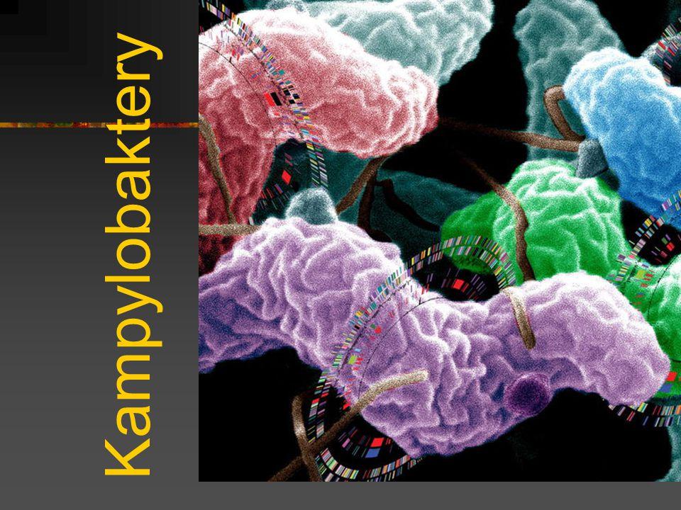 Kampylobaktery