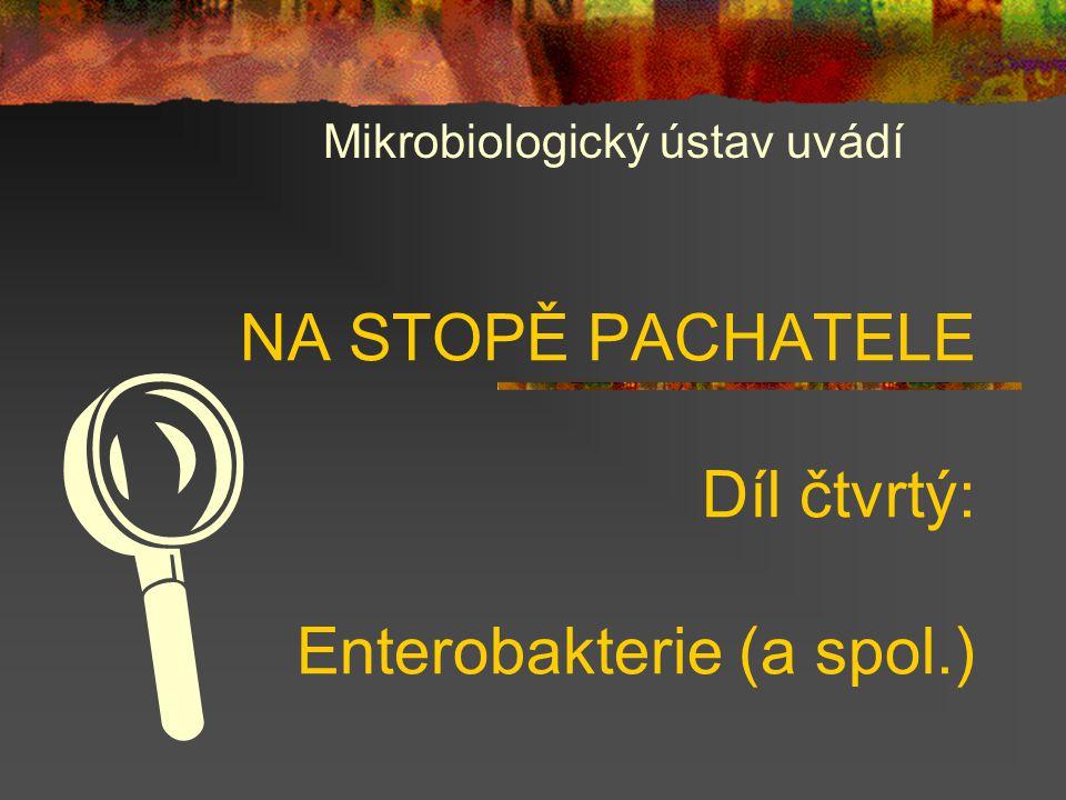 NA STOPĚ PACHATELE Díl čtvrtý: Enterobakterie (a spol.) Mikrobiologický ústav uvádí 