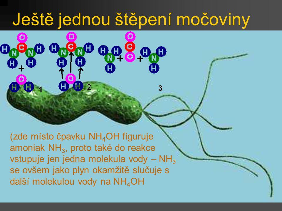 Ještě jednou štěpení močoviny (zde místo čpavku NH 4 OH figuruje amoniak NH 3, proto také do reakce vstupuje jen jedna molekula vody – NH 3 se ovšem j