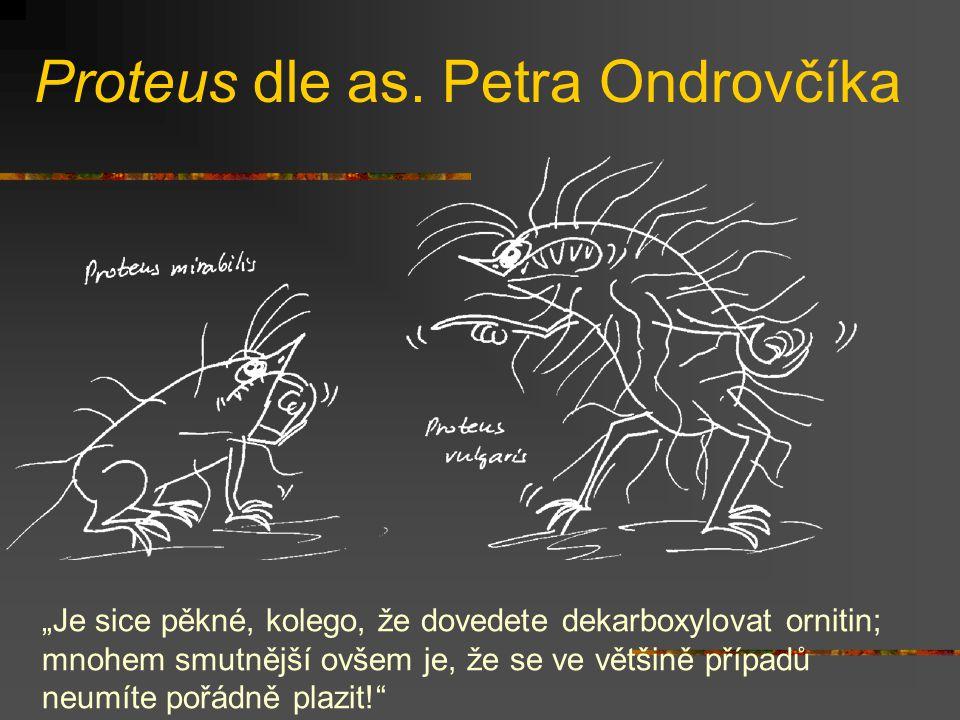 """Proteus dle as. Petra Ondrovčíka """"Je sice pěkné, kolego, že dovedete dekarboxylovat ornitin; mnohem smutnější ovšem je, že se ve většině případů neumí"""