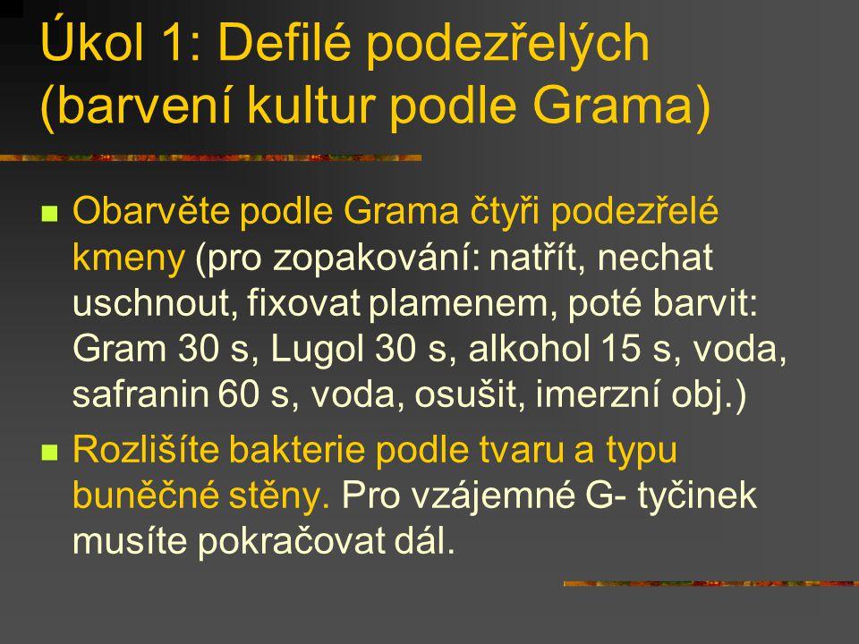 Úkol 1: Defilé podezřelých (barvení kultur podle Grama) Obarvěte podle Grama čtyři podezřelé kmeny (pro zopakování: natřít, nechat uschnout, fixovat p