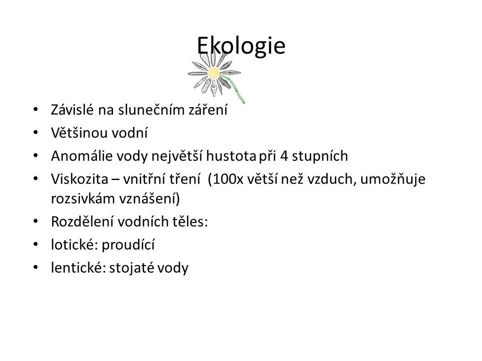 Ekologie Rozsivky v planktonu Pohyblivé x nepohyblivé- vznášejí se a klesají ve vodním sloupci v závislosti na viskozitě vody (Cyclotella), dobrou adaptací na pohyb ve vodním sloupci je tvar kolonií- hvězdicovitá Asterionella formosa ( zpomalení klesání) Fytoplankton: sinice a řasy obývající pelagiál hlubokých i mělkých stojatých vod a pomalu tekoucích úseků řek.