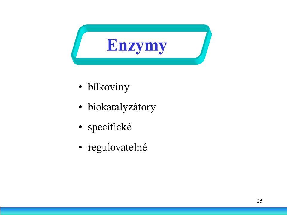 25 Enzymy bílkoviny biokatalyzátory specifické regulovatelné