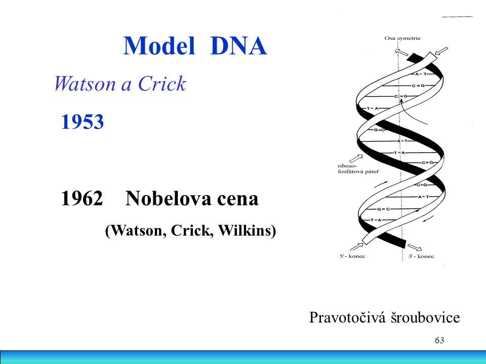 63 Model DNA Watson a Crick Pravotočivá šroubovice 1953 1962 Nobelova cena (Watson, Crick, Wilkins)