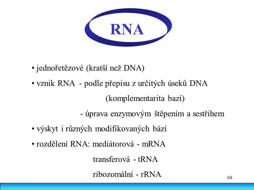 68 RNA jednořetězové (kratší než DNA) vznik RNA - podle přepisu z určitých úseků DNA (komplementarita bazí) - úprava enzymovým štěpením a sestřihem vý