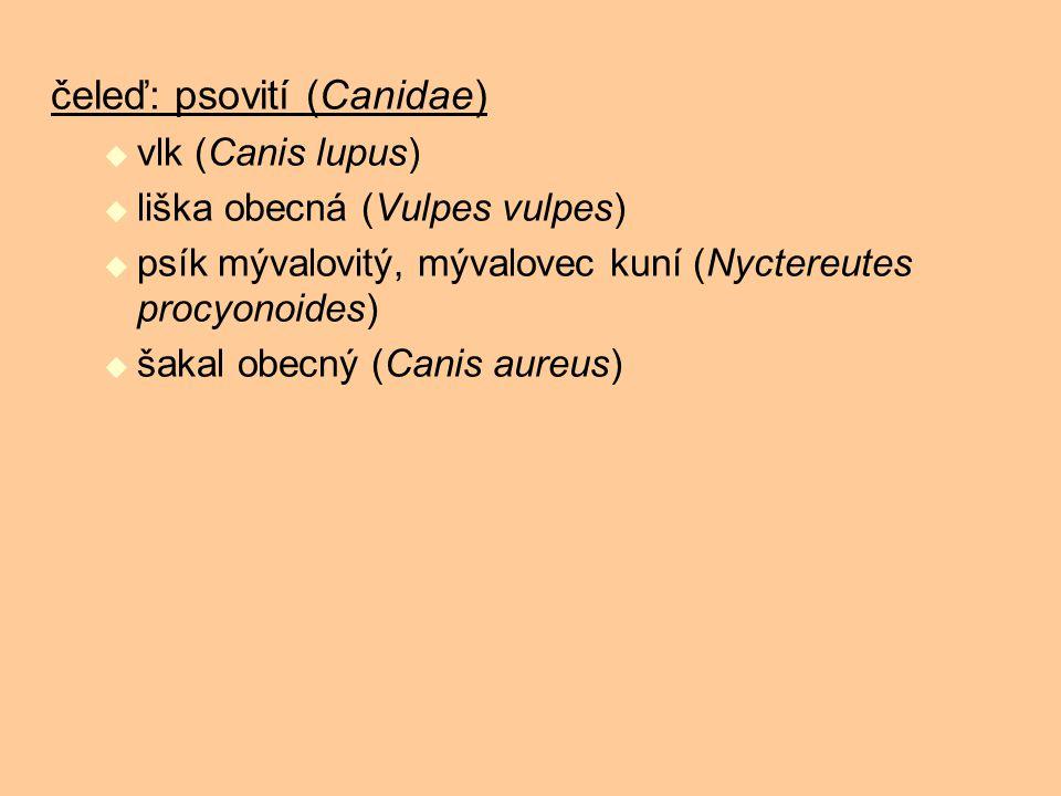 čeleď: psovití (Canidae)  vlk (Canis lupus)  liška obecná (Vulpes vulpes)  psík mývalovitý, mývalovec kuní (Nyctereutes procyonoides)  šakal obecn