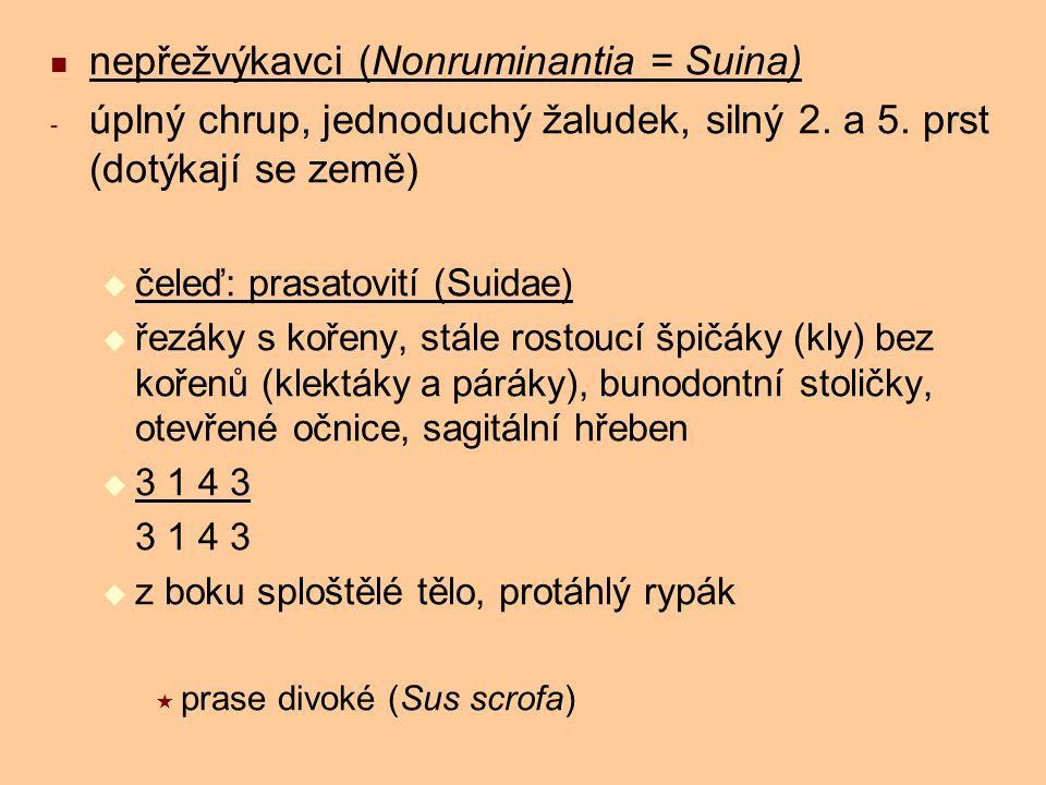 nepřežvýkavci (Nonruminantia = Suina) - úplný chrup, jednoduchý žaludek, silný 2. a 5. prst (dotýkají se země)  čeleď: prasatovití (Suidae)  řezáky