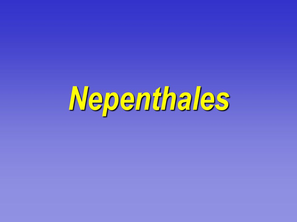 Nepenthales