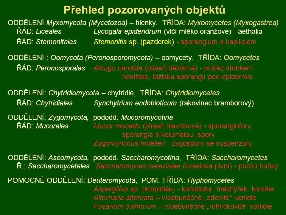 Přehled pozorovaných objektů ODDĚLENÍ Myxomycota (Mycetozoa) – hlenky, TŘÍDA: Myxomycetes (Myxogastrea) ŘÁD: LicealesLycogala epidendrum (vlčí mléko o