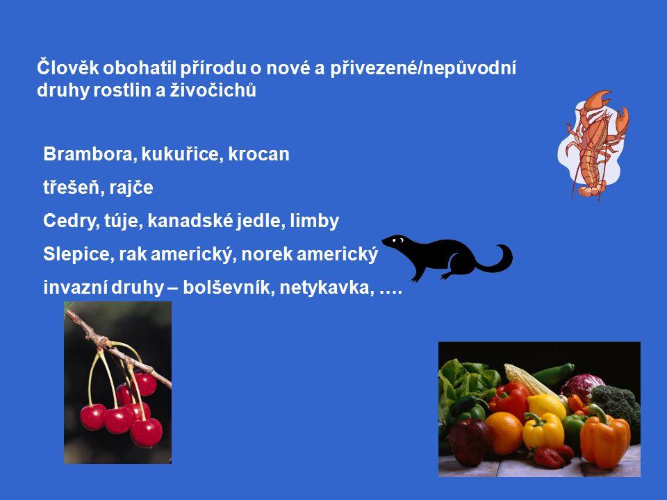 Člověk obohatil přírodu o nové a přivezené/nepůvodní druhy rostlin a živočichů Brambora, kukuřice, krocan třešeň, rajče Cedry, túje, kanadské jedle, limby Slepice, rak americký, norek americký invazní druhy – bolševník, netykavka, ….