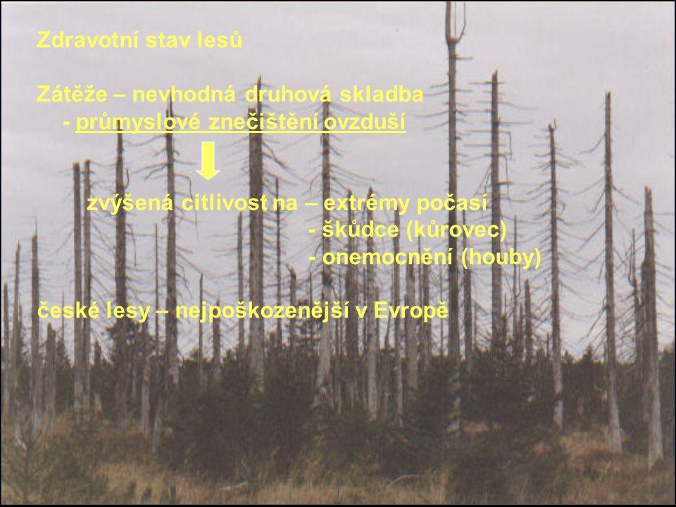 Zdravotní stav lesů Zátěže – nevhodná druhová skladba - průmyslové znečištění ovzduší zvýšená citlivost na – extrémy počasí - škůdce (kůrovec) - onemocnění (houby) české lesy – nejpoškozenější v Evropě