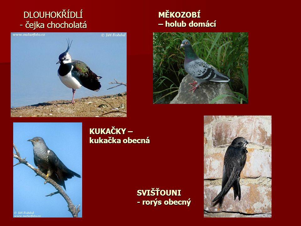 DLOUHOKŘÍDLÍ - čejka chocholatá MĚKOZOBÍ – holub domácí KUKAČKY – kukačka obecná SVIŠŤOUNI - rorýs obecný