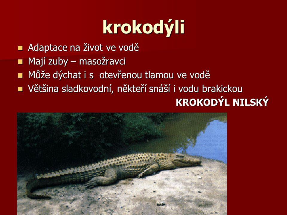 krokodýli Adaptace na život ve vodě Adaptace na život ve vodě Mají zuby – masožravci Mají zuby – masožravci Může dýchat i s otevřenou tlamou ve vodě Může dýchat i s otevřenou tlamou ve vodě Většina sladkovodní, někteří snáší i vodu brakickou Většina sladkovodní, někteří snáší i vodu brakickou KROKODÝL NILSKÝ KROKODÝL NILSKÝ