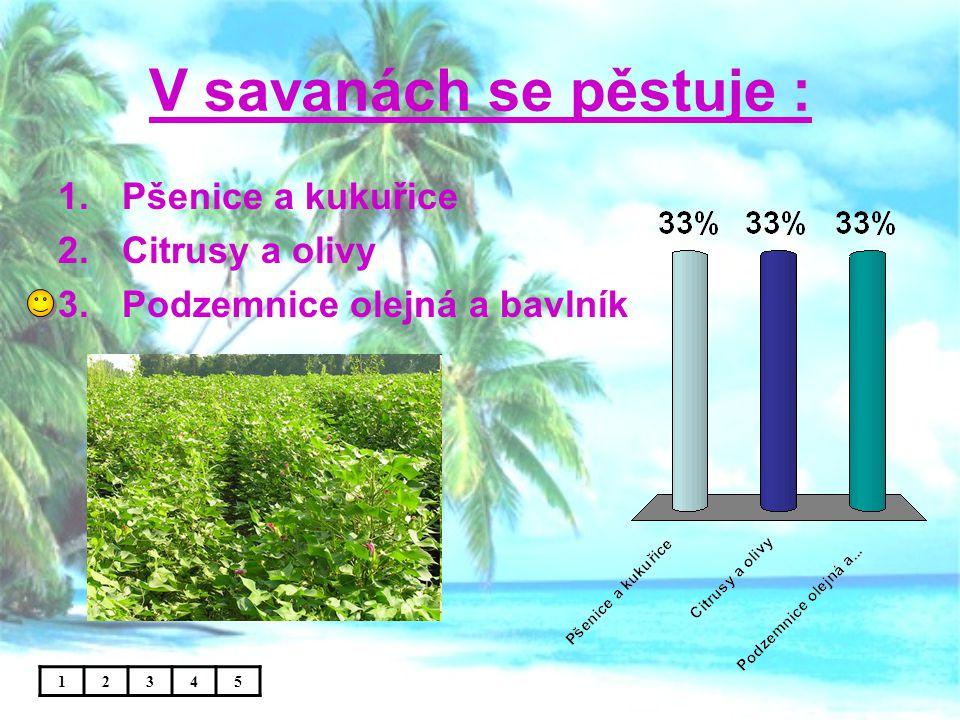 V savanách se pěstuje : 1.Pšenice a kukuřice 2.Citrusy a olivy 3.Podzemnice olejná a bavlník 12345