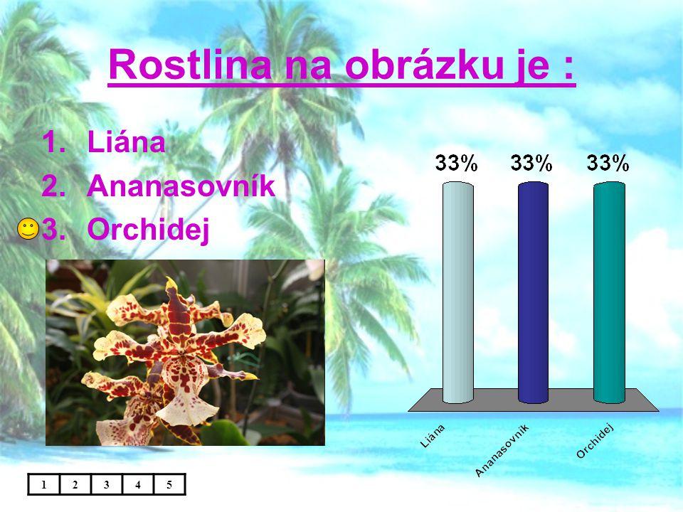 Rostlina na obrázku je : 12345 1.Liána 2.Ananasovník 3.Orchidej