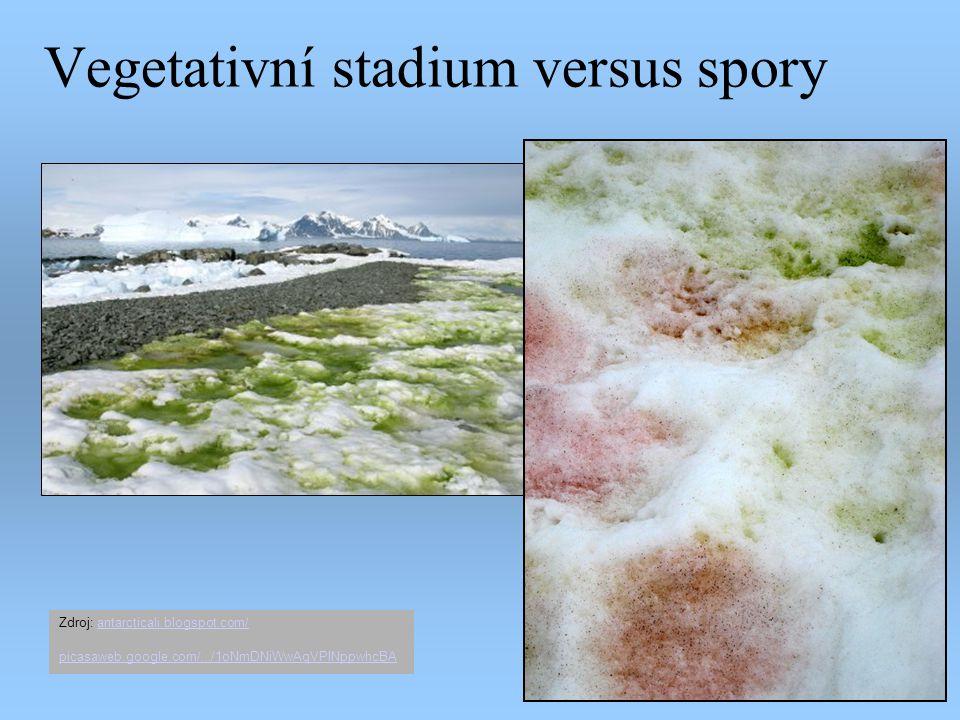 Vegetativní stadium versus spory Zdroj: antarcticali.blogspot.com/antarcticali.blogspot.com/ picasaweb.google.com/.../1oNmDNiWwAqVPINppwhcBA