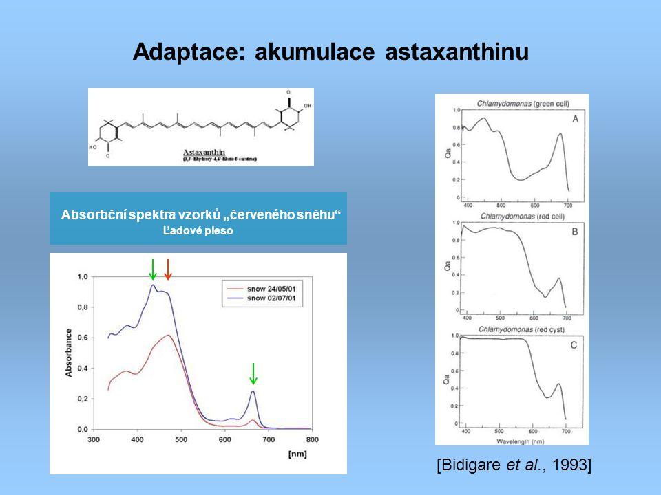 """Absorbční spektra vzorků """"červeného sněhu"""" Ľadové pleso Adaptace: akumulace astaxanthinu [Bidigare et al., 1993]"""