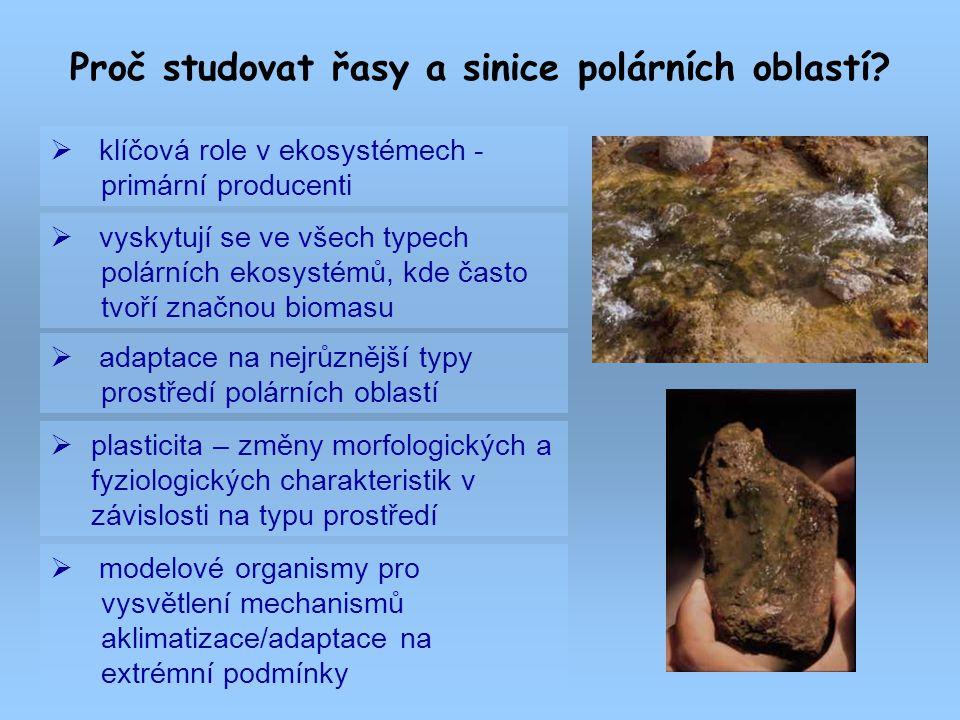 Proč studovat řasy a sinice polárních oblastí?  klíčová role v ekosystémech - primární producenti  vyskytují se ve všech typech polárních ekosystémů