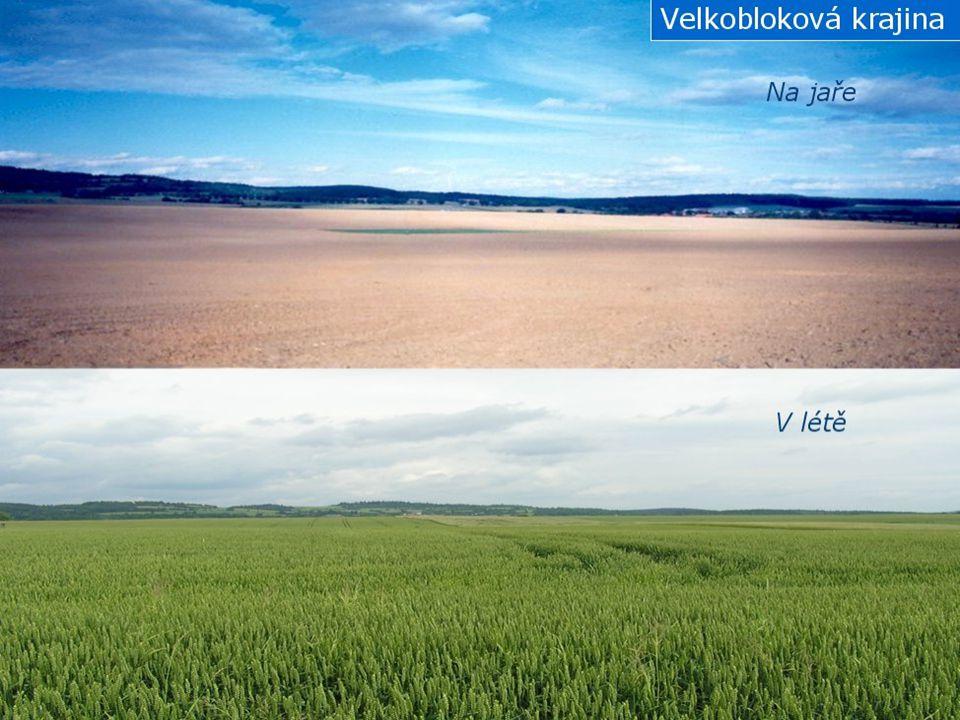 Ekologické důsledky změn v krajině Zvýšení druhové a ekosystémové diverzity Disturbance Posílení rozmanitosti biotopů Velkoplošná nivelizace Velkoplošné odovodňování Snížení ekologické stability a biodiverzity Eroze půdy Kvalita povrchových i podzemních vod Zvýšení rozkolísanosti vodního režimu zejm.