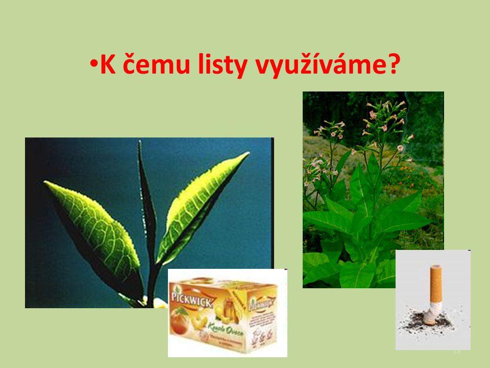  čajovník, tabák K čemu listy využíváme? List18