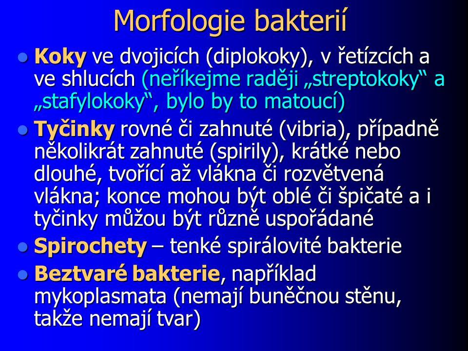 """Morfologie bakterií Koky ve dvojicích (diplokoky), v řetízcích a ve shlucích (neříkejme raději """"streptokoky a """"stafylokoky , bylo by to matoucí) Koky ve dvojicích (diplokoky), v řetízcích a ve shlucích (neříkejme raději """"streptokoky a """"stafylokoky , bylo by to matoucí) Tyčinky rovné či zahnuté (vibria), případně několikrát zahnuté (spirily), krátké nebo dlouhé, tvořící až vlákna či rozvětvená vlákna; konce mohou být oblé či špičaté a i tyčinky můžou být různě uspořádané Tyčinky rovné či zahnuté (vibria), případně několikrát zahnuté (spirily), krátké nebo dlouhé, tvořící až vlákna či rozvětvená vlákna; konce mohou být oblé či špičaté a i tyčinky můžou být různě uspořádané Spirochety – tenké spirálovité bakterie Spirochety – tenké spirálovité bakterie Beztvaré bakterie, například mykoplasmata (nemají buněčnou stěnu, takže nemají tvar) Beztvaré bakterie, například mykoplasmata (nemají buněčnou stěnu, takže nemají tvar)"""