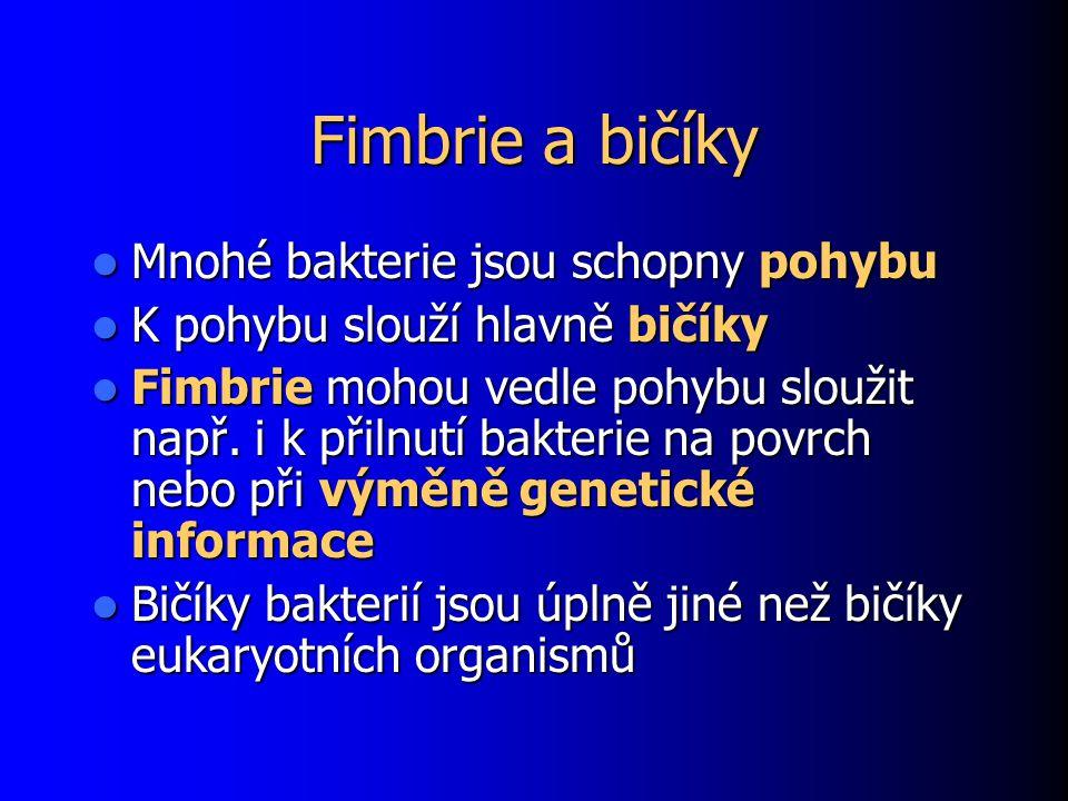 Fimbrie a bičíky Mnohé bakterie jsou schopny pohybu Mnohé bakterie jsou schopny pohybu K pohybu slouží hlavně bičíky K pohybu slouží hlavně bičíky Fimbrie mohou vedle pohybu sloužit např.