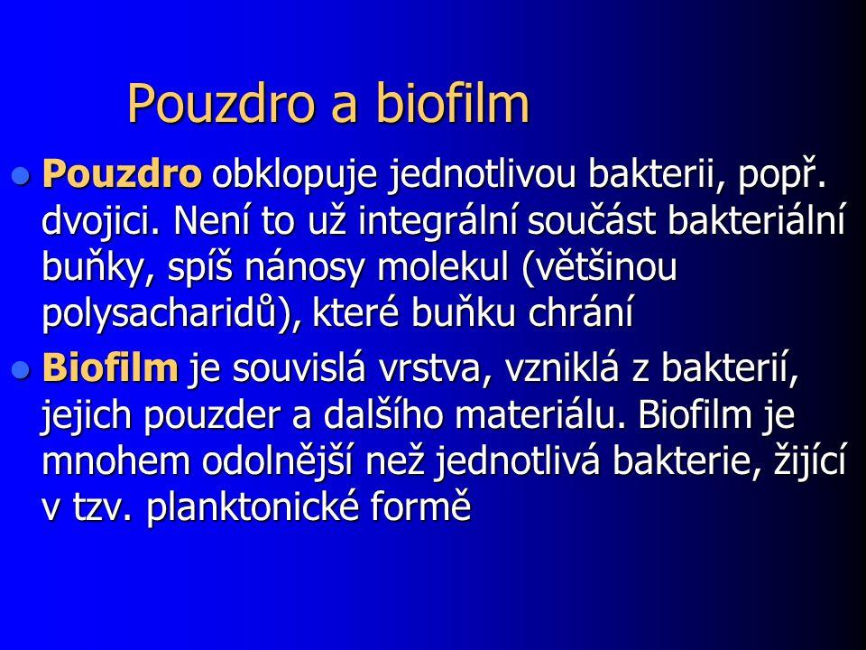 Pouzdro a biofilm Pouzdro obklopuje jednotlivou bakterii, popř. dvojici. Není to už integrální součást bakteriální buňky, spíš nánosy molekul (většino