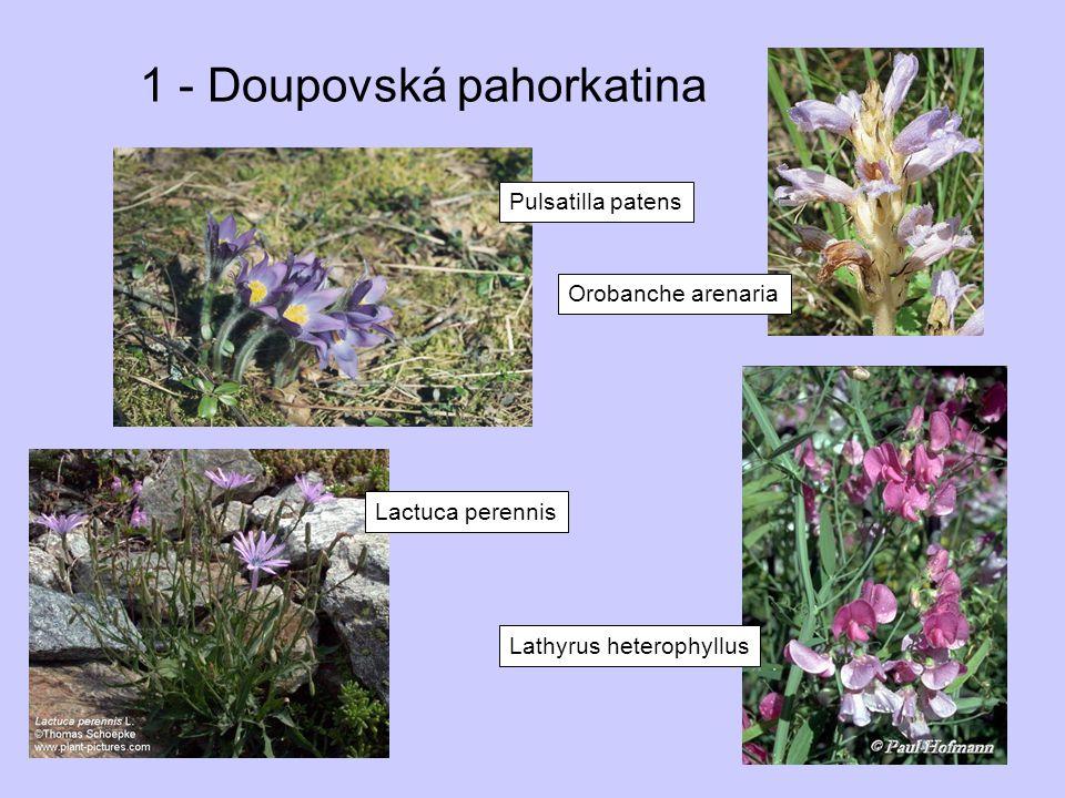 1 - Doupovská pahorkatina Lactuca perennis Lathyrus heterophyllus Pulsatilla patens Orobanche arenaria