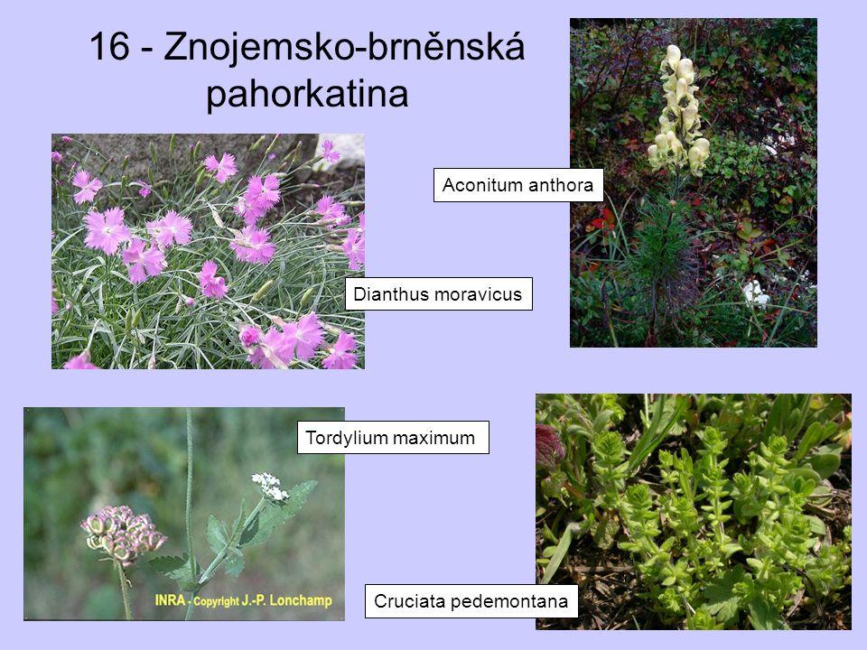 16 - Znojemsko-brněnská pahorkatina Dianthus moravicus Aconitum anthora Tordylium maximum Cruciata pedemontana