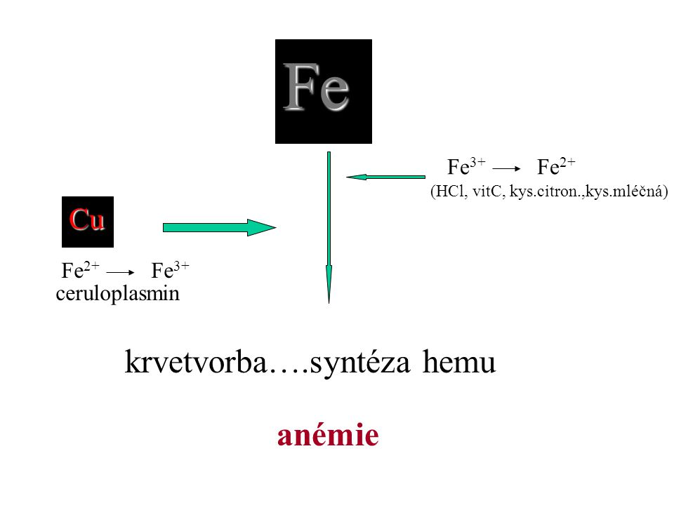 Fe krvetvorba….syntéza hemu Cu anémie Fe 3+ Fe 2+ (HCl, vitC, kys.citron.,kys.mléčná) ceruloplasmin Fe 2+ Fe 3+