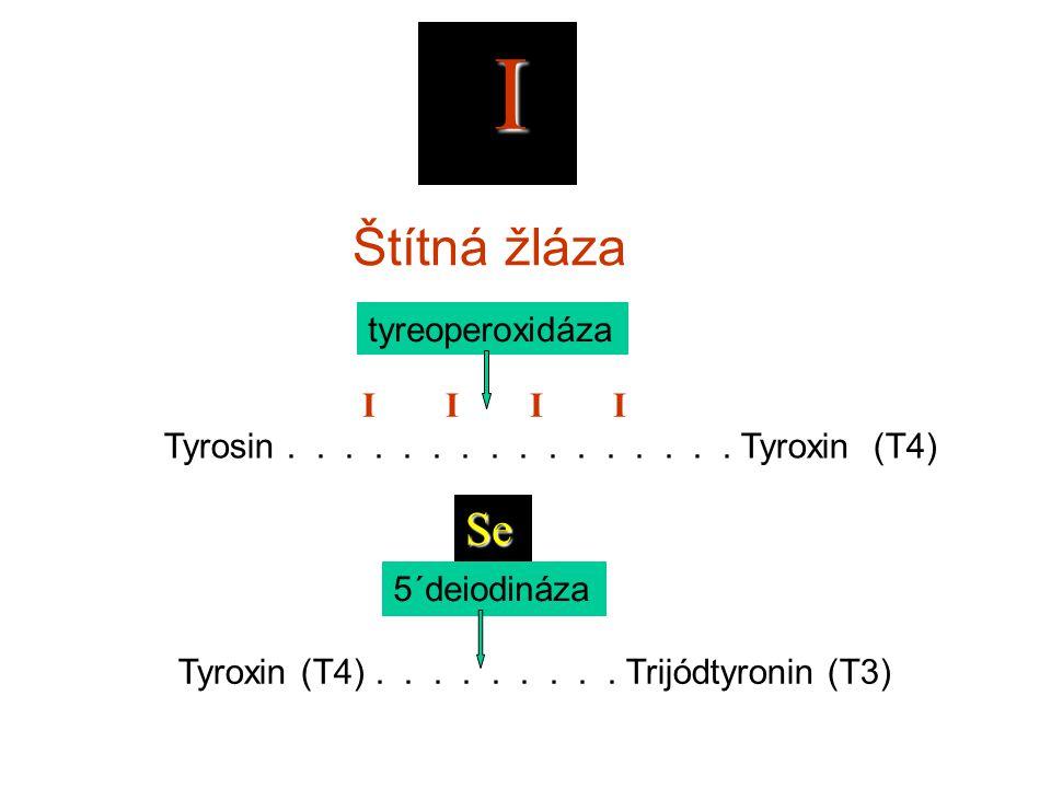 I Štítná žláza Tyrosin................ Tyroxin (T4) I I Tyroxin (T4)......... Trijódtyronin (T3) 5´deiodináza Se Selen je na rozdíl od zinku a mědi zn