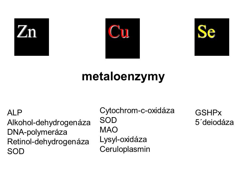 ZnCuSe ALP Alkohol-dehydrogenáza DNA-polymeráza Retinol-dehydrogenáza SOD Cytochrom-c-oxidáza SOD MAO Lysyl-oxidáza Ceruloplasmin GSHPx 5´deiodáza met