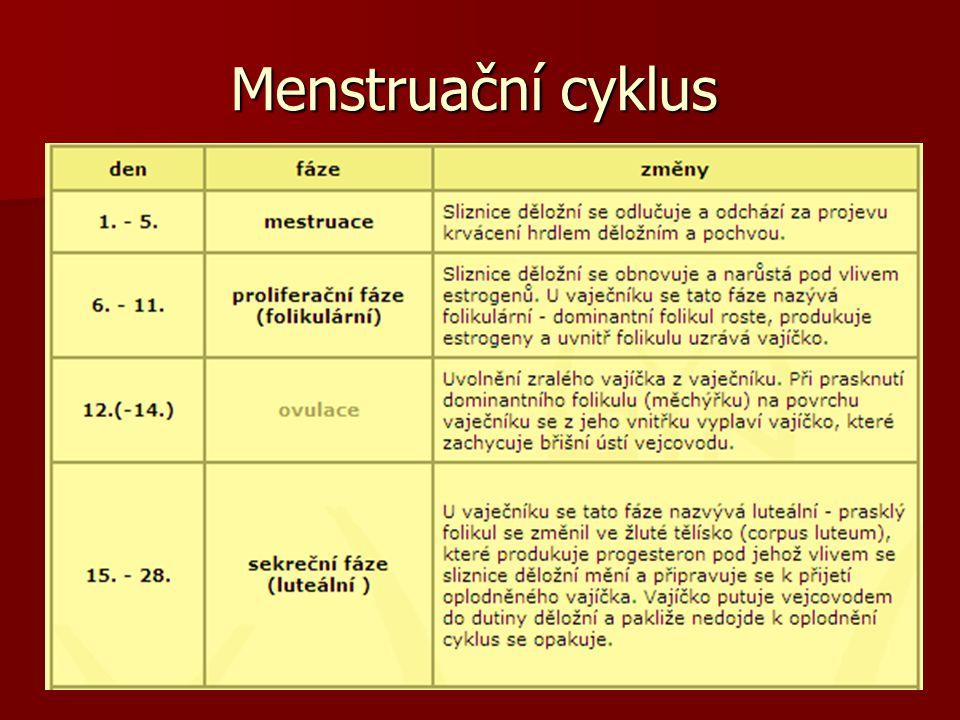Menstruační cyklus