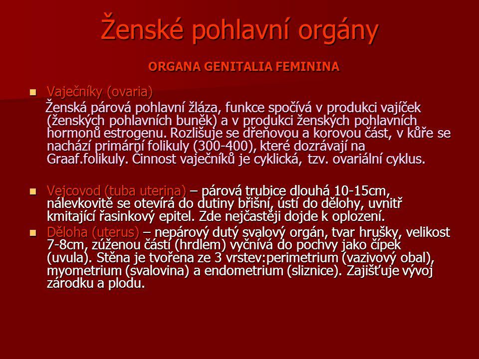Ženské pohlavní orgány ORGANA GENITALIA FEMININA Vaječníky (ovaria) Vaječníky (ovaria) Ženská párová pohlavní žláza, funkce spočívá v produkci vajíček (ženských pohlavních buněk) a v produkci ženských pohlavních hormonů estrogenu.