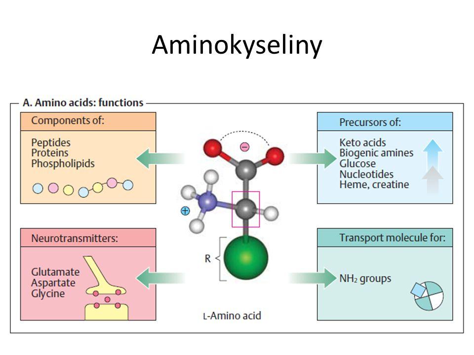 Proteinogenní aminokyseliny