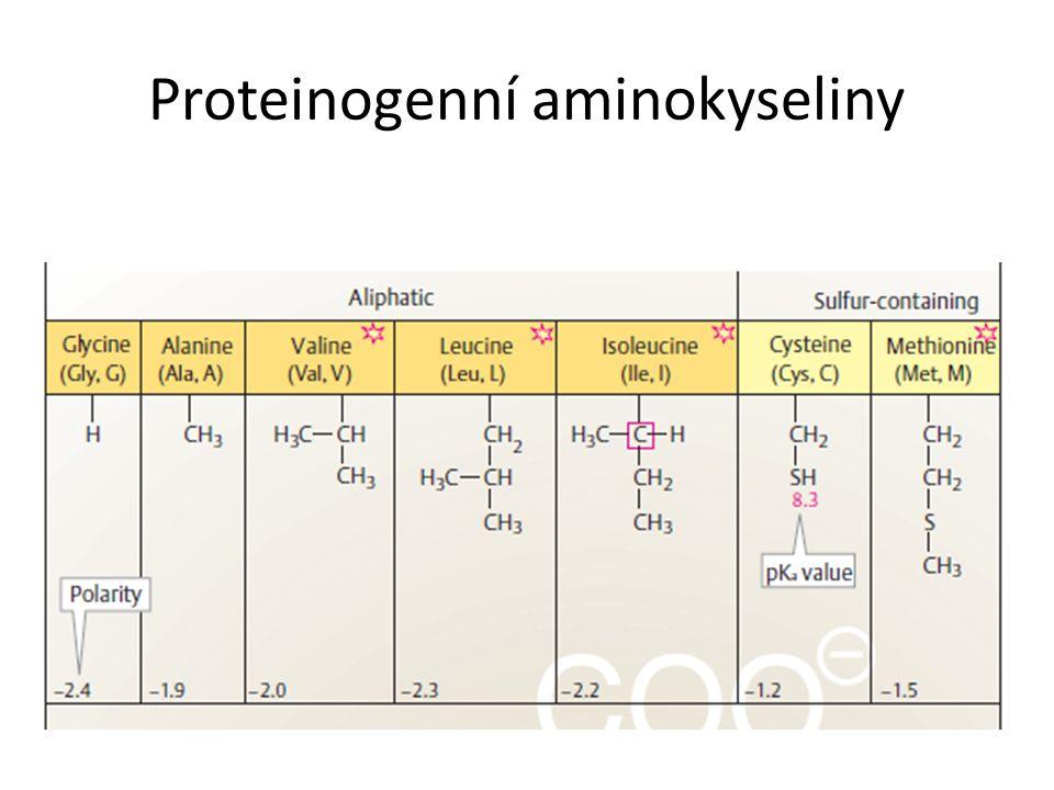 kvartérní struktura proteiny složené z více podjednotek různé nebo stejné (oligomerní protein vs.