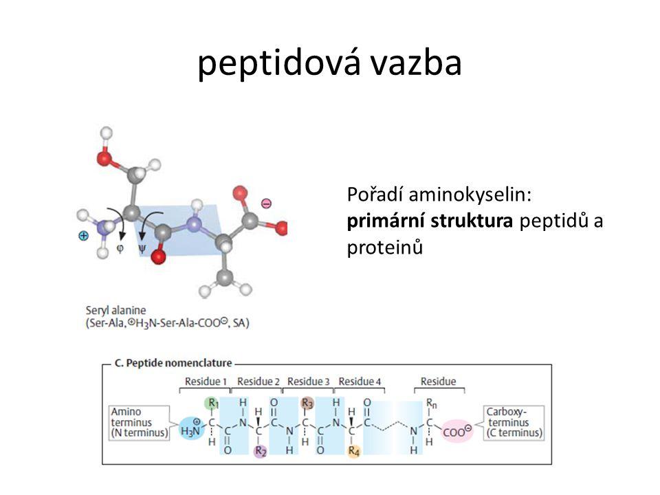 Sekundární struktura proteinů uspořádání po sobě následujících zbytků AK (helixy, otáčky, listy) charakteristické úhly mezi skupinami tvořícími peptidovou vazbu stabilizace vodíkovými vazbami mezi skupinami tvořícími peptidovou vazbu