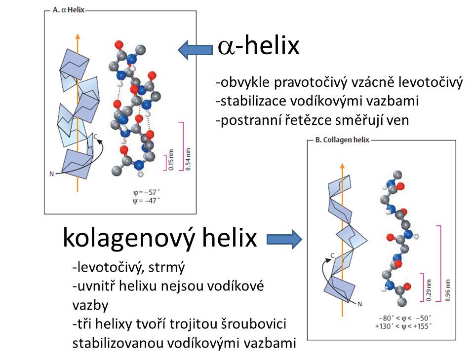  -helix -obvykle pravotočivý vzácně levotočivý -stabilizace vodíkovými vazbami -postranní řetězce směřují ven kolagenový helix -levotočivý, strmý -uvnitř helixu nejsou vodíkové vazby -tři helixy tvoří trojitou šroubovici stabilizovanou vodíkovými vazbami