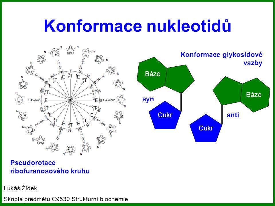 Konformace nukleotidů Pseudorotace ribofuranosového kruhu Cukr Báze syn Cukr Báze anti Konformace glykosidové vazby Lukáš Žídek Skripta předmětu C9530 Strukturní biochemie