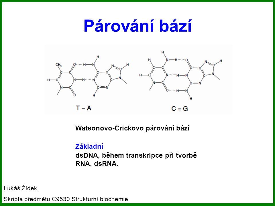 Párování bází Watsonovo-Crickovo párování bází Základní dsDNA, během transkripce při tvorbě RNA, dsRNA.