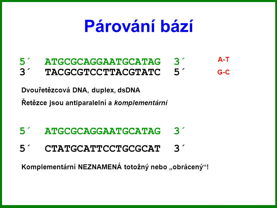 """Párování bází 5´ ATGCGCAGGAATGCATAG 3´ 3´ TACGCGTCCTTACGTATC 5´ A-T G-C Dvouřetězcová DNA, duplex, dsDNA Řetězce jsou antiparalelní a komplementární 5´ ATGCGCAGGAATGCATAG 3´ 5´ CTATGCATTCCTGCGCAT 3´ Komplementární NEZNAMENÁ totožný nebo """"obrácený !"""